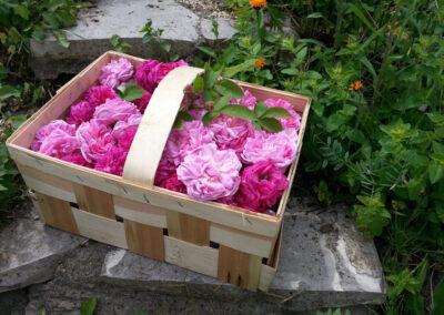 Impressionen von Bock&Gardener