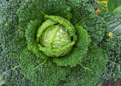 G&G Gemüsehandel & Anbau