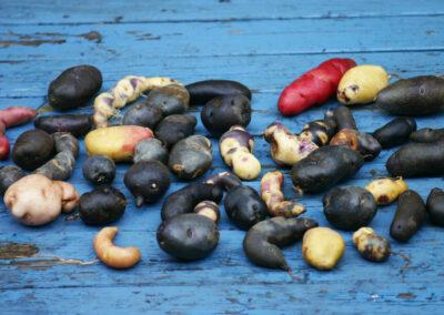 Ellenbergs Kartoffelvielfalt