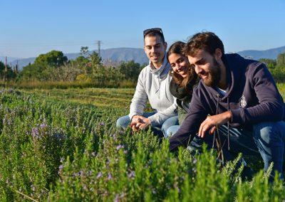 artefakt Olivenölkampagne - Kräutersalze aus Spanien